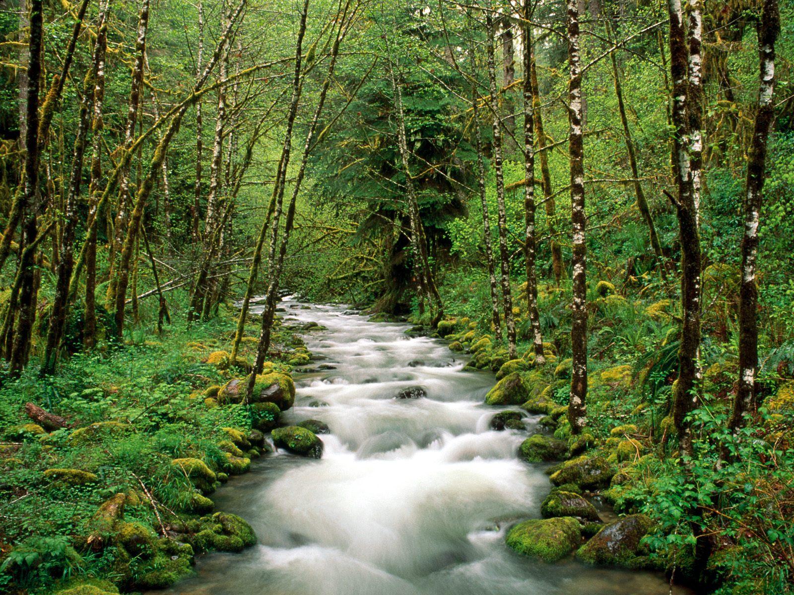 Mckenzie river willamette national forest oregon