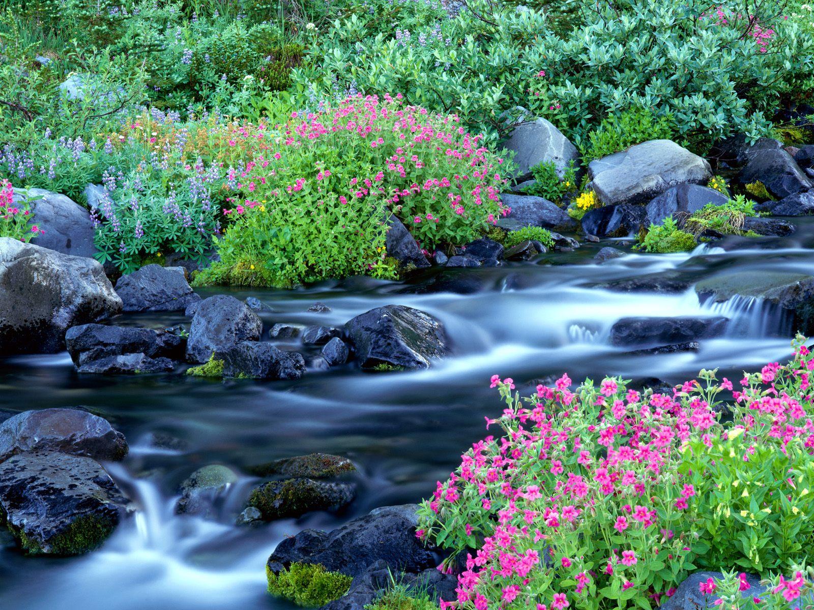 Paradise river mount rainier national park washington
